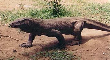 Le Monde préhistorique : Dinosaures et autres ... Komodo