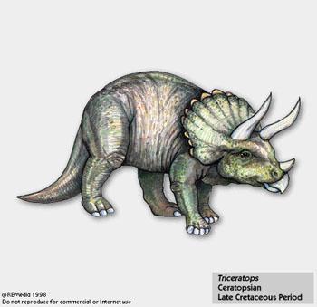 Le Monde préhistorique : Dinosaures et autres ... Triceratops%21