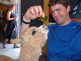 Ajax the Llama