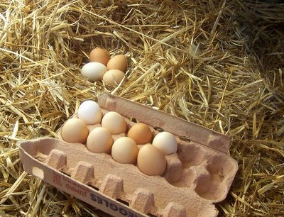 Free range eggs, or battery farmed cheats?