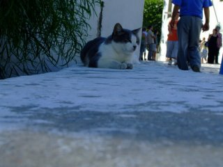 Cats Sidi Bou Said