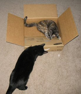 Catzee & I carefully inspect each box from top to bottom.