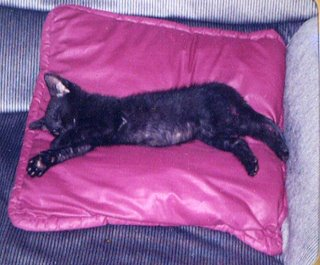 Baby Rascal, sound asleep on a pillow.