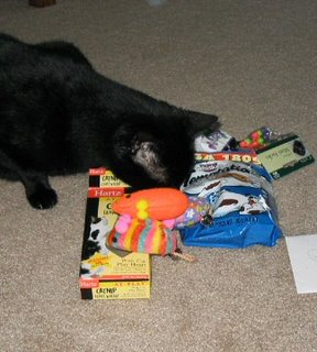 Rascal investigating his prizes.