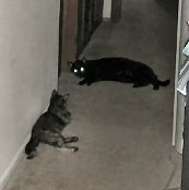 Rascal keeping Catzee at bay with his scary Glowing Eyes.