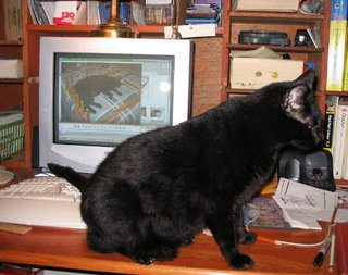Me, keeping the keyboard warm with my tail.