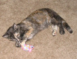 Catzee playing with the catnip mouse which Rascal graciously gave her.