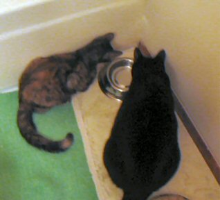 Rascal & Catzee inspecting the new water dish.