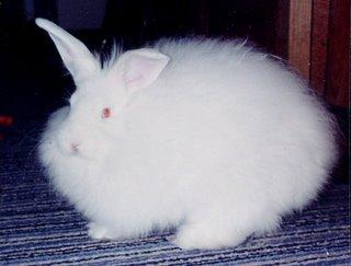Rudy, Rascal's bunny brother.