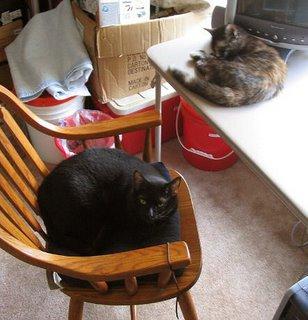 Rascal and Catzee