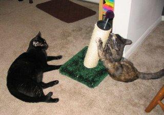 Sometimes Catzee amuses Rascal.