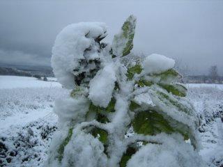 Coyote des neiges c 39 est l 39 hiver qui frappe notre porte - C est l hiver qui frappe a notre porte ...