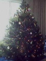 This year's tree!