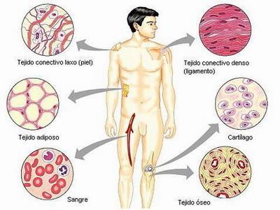 Mls la medicina contra los parásitos