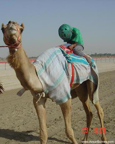 roryshock: United Arab Emirates: The Land of the Camel ...