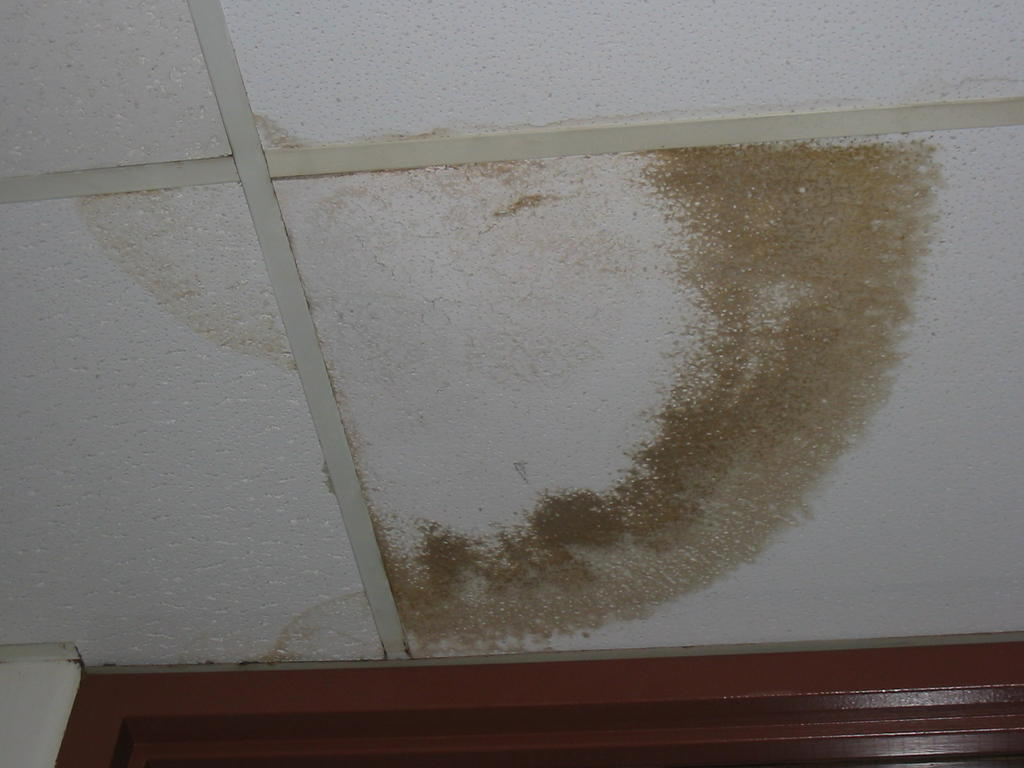 It S Hard To Tell For Sure But Looks Like A Fresh Water Stain I E Is Still Leaking In From Somewhere Above The Tiles Roof