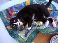 Bullwinkle ships cat sailing feline