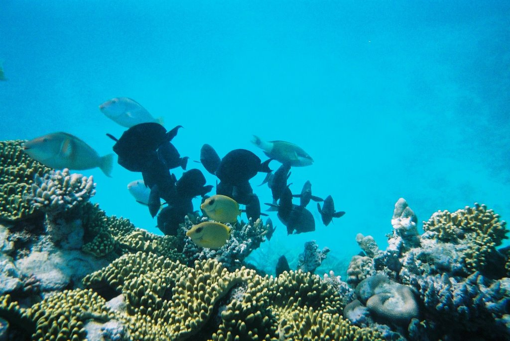 reef adventure business Read the latest posts about reef on adventure sports network.