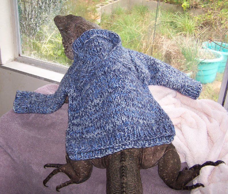 Knitting Pattern For Bearded Dragon : Lizards in Scarves: A Sweater For Wyatt