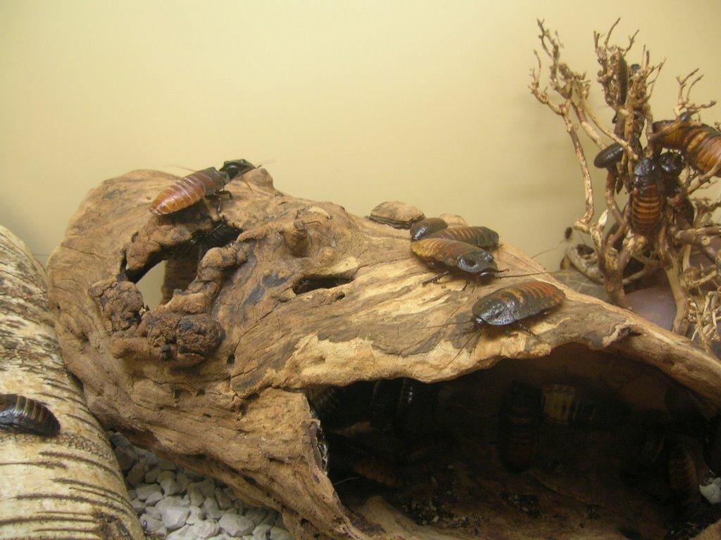 jardin zoologique de la citadelle de besan on. Black Bedroom Furniture Sets. Home Design Ideas