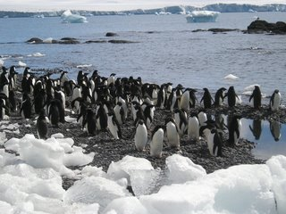 And even more penguins