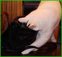Sam inspects The Perfect (old) Purse