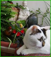 Samcat with statue of Kwan Yin (Kannon)in the balcony garden