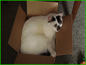 Sam - all boxed up.
