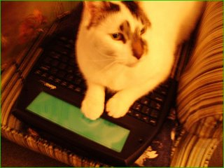 Sam ponders the next chapter, NaNoWriMo 2006