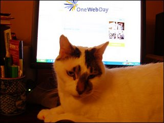 Sam the Cat Ponders OneWebDay