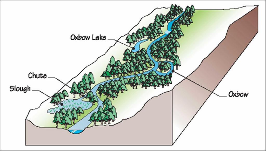Riparian Buffer Zones Riparian Buffer Zone a Strip