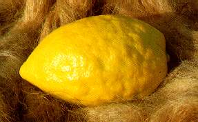 This is an etrog.