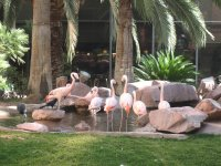 Las Vegas Flamingos