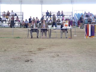Cattle judging - but this was between the cattle