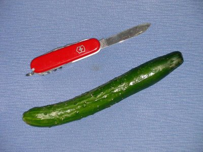 Cucumber, Japanese size