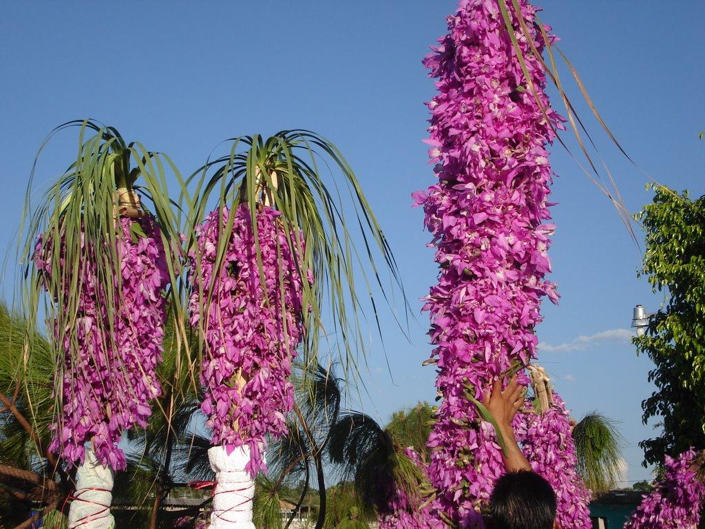 Penjamillo Fiestas Del Pino Y La Flor 2015 | New Calendar Template ...