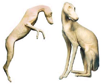 form function canine and