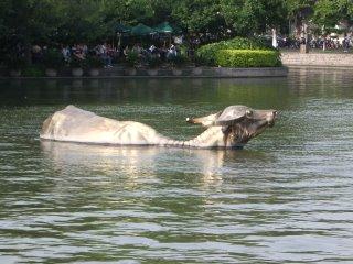 Golden water buffalo, West Lake, Hangzhou