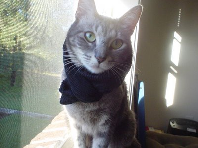 Kitty in Scarf(TM) EtchCo