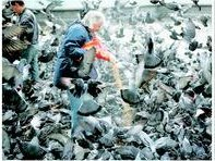 London's Pigeons
