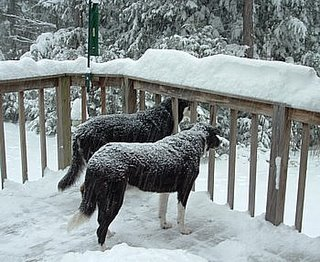 Lola and Shadow getting snowed upon
