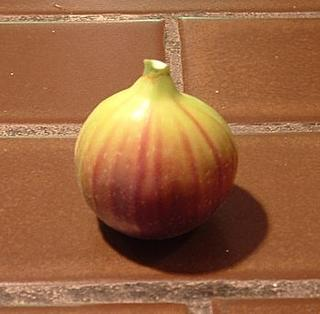 the fig prior to consumption
