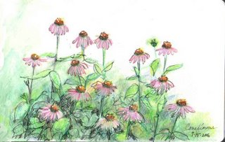 coneflowers
