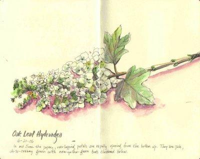 oak leaf 2