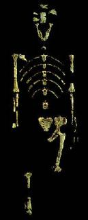Lucy is a fossil specimen of Australopithecus afarensis.