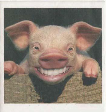 gekke dieren!: even lachen naar de camera!