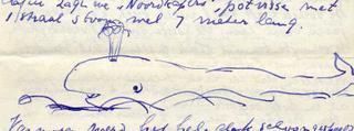 Noordkapers - potvissen - klik om te vergroten
