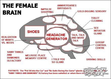 The Female Brain  The Sandlot