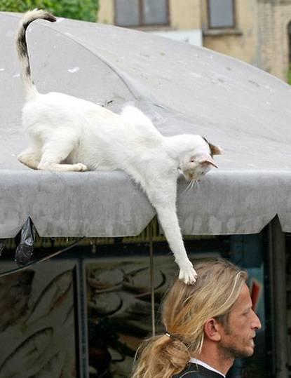 Funny cat theft