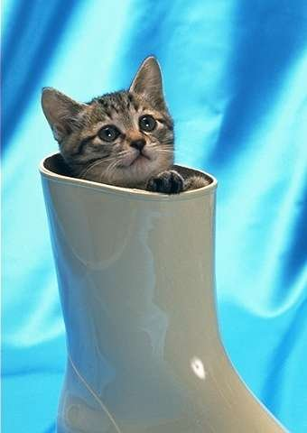 Funny Cat Trap